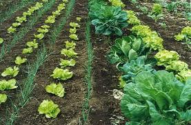 Curso Gratuito de Gestión de Explotaciones Agrarias Ecológicas